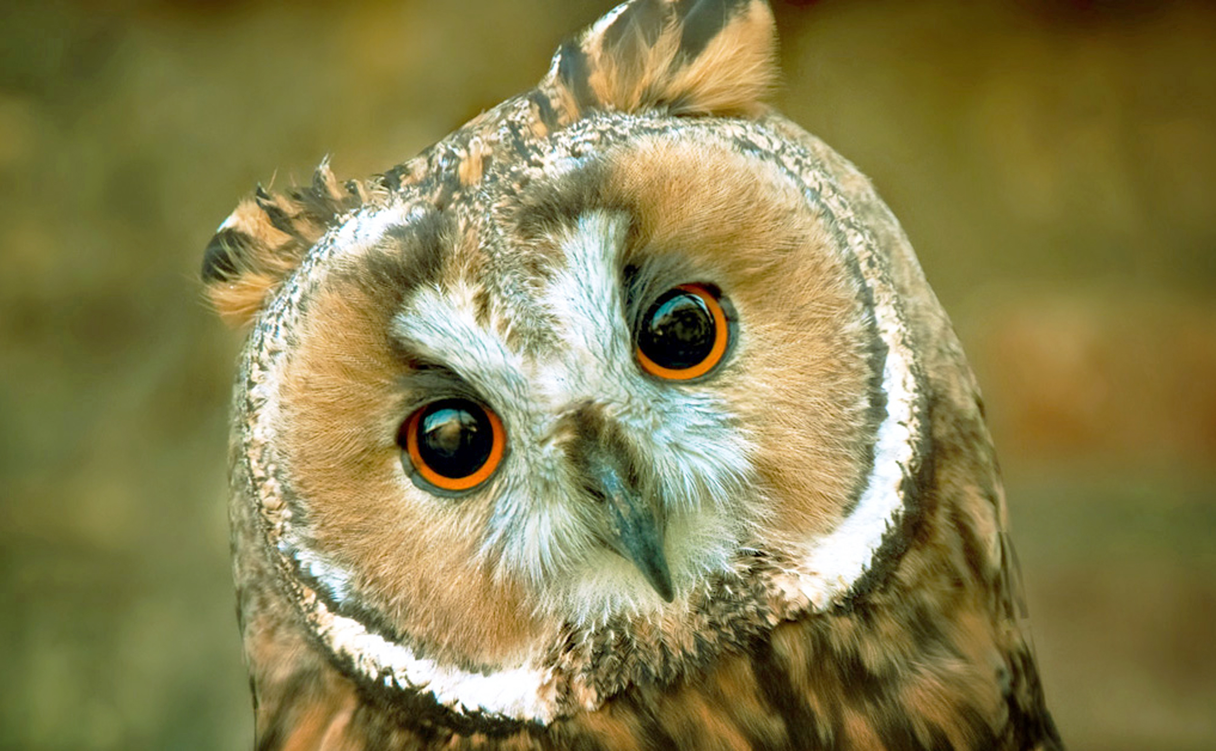 Portrait of an owl in the zoo
