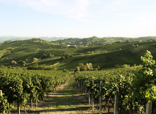 Monferrato acquese
